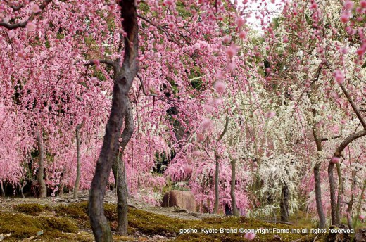 城南宮 楽水苑 春の山