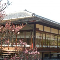 梅 渉成園(枳殻邸)