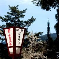 SAKURA 2008 No.1