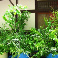 葵祭 下鴨神社
