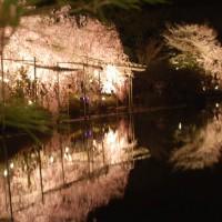 花見 桜 紅しだれコンサート 平安神宮東神苑