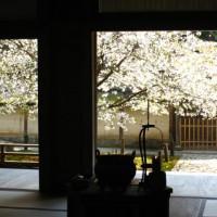 花見 桜 常照皇寺 光厳天皇