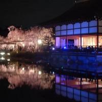 花見 桜 紅しだれコンサート 平安神宮神苑