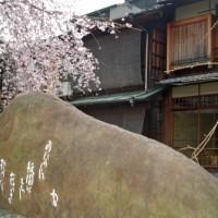 花見 桜  祗園白川 吉井勇