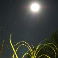 中秋の名月 いずこで月見酒
