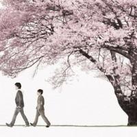 桜ソング 桜