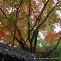 秋のくろ谷 金戒光明寺