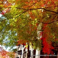 知られざる清水寺境内の紅葉