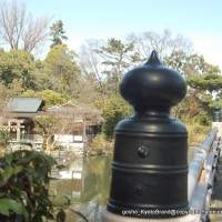 京都御苑 春一番を歩く