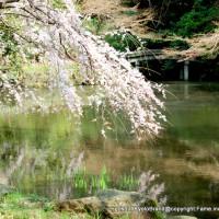 東日本大震災 京都御苑 近衛池