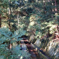 紅葉  疎水路