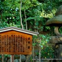 観月茶会 妙心寺 退蔵院