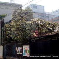 京都近代建築遺産 平楽寺書店