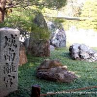 観梅 城南宮の枝垂れ梅