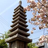 八重桜の園 千本ゑんま堂
