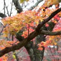 秋の物見遊山 / 岩戸落葉神社