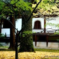 紅葉 広隆寺