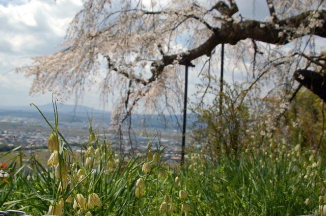 京の東西南北いたるところ銘木、名水、うまいものあり