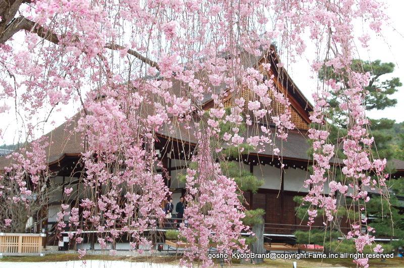 嵯峨野散策 紅枝垂桜ごしの宸殿
