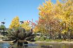 銀杏 紅葉 黄葉 : 銅彫像の蓮とイチョウ