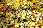 銀杏 紅葉 黄葉 : 小粒の銀杏がぎっしりと落ちている