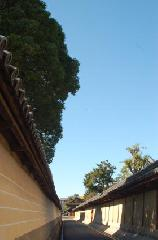 銀杏 紅葉 黄葉 : 国宝唐門は寺域の南側、北小路通に面した位置にある。