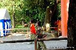 葵祭 路頭の儀 : 乗尻は馬を降り一の鳥居より先導する