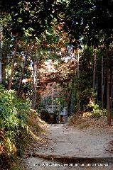 初詣 狛犬 狛龍 パワースポット : 神宝神社への参道