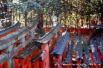 初詣 狛犬 狛龍 パワースポット : 千本鳥居も見下ろす