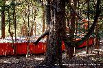 初詣 狛犬 狛龍 パワースポット : 千本鳥居を外側から
