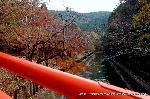 初詣 干支 龍 辰 : 山科疎水にかかる参道の橋