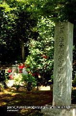花暦 花菖蒲 観蓮会 : 名勝法金剛院庭園