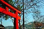萩 花暦 : 稲荷社の鳥居より大文字