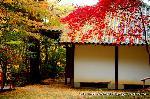 紅葉 : 大師堂の屋根に黄葉、背後に真っ赤な楓