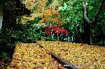 紅葉 : 大師堂の裏にあたる場所に黄葉が降り積もる