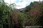 彼岸 : 萩の花 尾花 葛花 瞿麦の花 女郎花 また 藤袴 朝貌の花 (はぎのはな おばな くずはな なでしこのはな おみなえし また ふじばかま あさがおのはな) 山上 憶良  秋の野に咲く代表的な花を数え上げた秋の七草。  万葉の時代から、現代に至るまで幾人もの人が、様々な秋の七草を数え上げてきましたが、万葉集(第八巻)に詠まれた山上憶良のこの七草を越えるものは現れなかったように思われます。 さぁ、七草の萩、ここ常林寺では見ごろが続いています。
