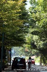 : 並木の先に萩の絨毯が薄桃色に見える 詳細→http://blog.livedoor.jp/rockkakudo/archives/51516977.html