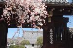 信長忌 本能寺の変 : 入洛時の信長の常宿としていた寺院