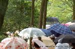お田植祭  : 神田のお田植祭を眺める観客