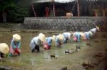 梅雨  田植祭 : 芒種/神田に早乙女