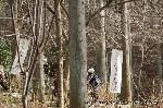 大根焚き : 杉木立を歩いた先に・・・