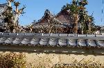 観梅 軒端梅 : 塀外から本堂を窺う