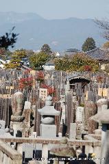 観梅 : 会津藩士墓地から真如堂への裏山から望む