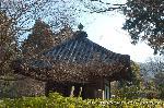 観梅 黒谷の紅梅 : このお堂の志うん石(紫雲石)が鎮座する