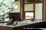 桜見 花見 観桜 嵯峨野散策 世界遺産 : 枯山水石庭模型