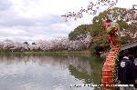 桜見 花見 観桜 嵯峨野散策  : 鷁首船に大沢池