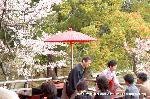 桜見 花見 観桜 嵯峨野散策 : 茶席
