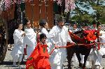 葵祭 : 牛童(うしわらわ)と牛車 (ぎっしゃ)