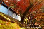 紅葉 紅葉狩 花暦