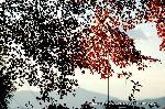紅葉 紅葉狩 花暦 : 西を向くと